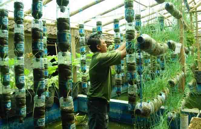 Petani Kembangkan Padi dan Sayuran dengan Sistem Aquaponik ...