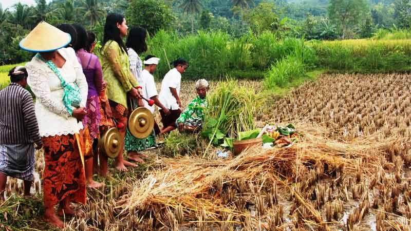 Boyongan Dewi Sri di Dusun Jelok Patuk. Foto: Juju.