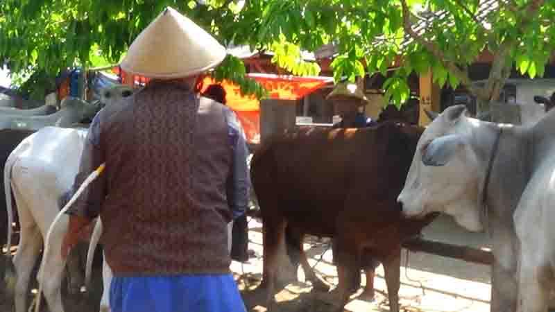 Pasar sapi Sihonoharjo