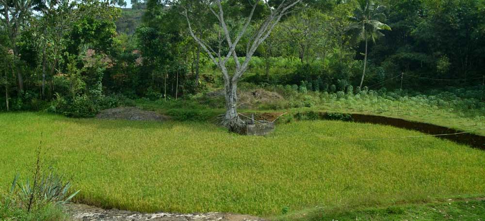 Tlaga Guyangan, Kampung 7 KK Nglanggeran. Photo: WG