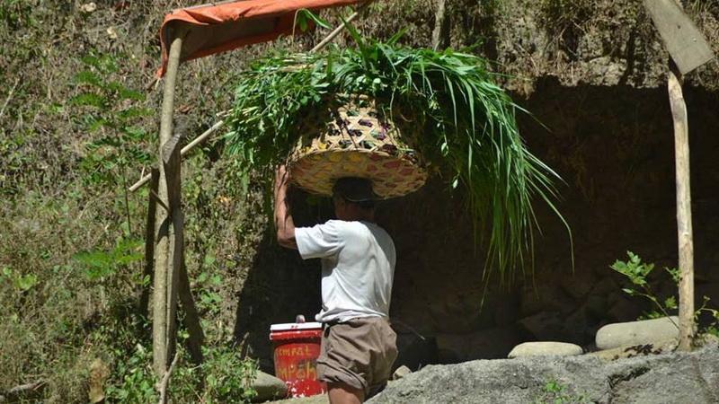 Pak Arjo ngarit suket menyeberangi batas teritori Gunungkidul - Sleman. KH/Klepu.