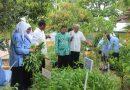 Hutan Sekolah, Andalan SMP N 1 Ponjong Sambut Penilaian Sekolah Adiwiyata DIY
