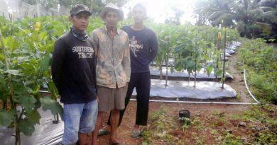 Dengan Teknik Yang Tepat, 4 Petani Muda Tanjungsari Sulap Lahan Berbatu Jadi Lahan Subur