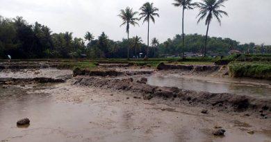 Petani Lahan Basah Menyesal Tak Ikut Asuransi