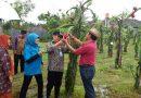 Wakil Bupati Gunungkidul Apresiasi Kebun Buah Naga SMA N 2 Playen