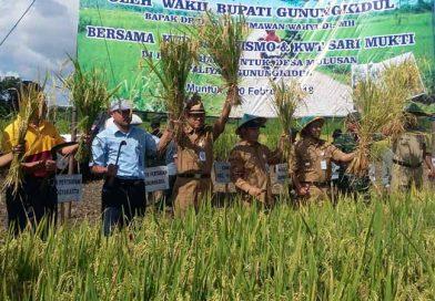 Varietas Padi Jenis Mekongga Hasilkan 8,4 Ton Gabah Per Hektare