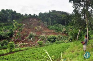 Longsoran di Bukit Manjung Girisubo rusak lahan pertanian penduduk. Foto: Rado