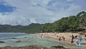 Pantai Wediombo dengan pasir putih dan pepohonannya. Foto : Hari