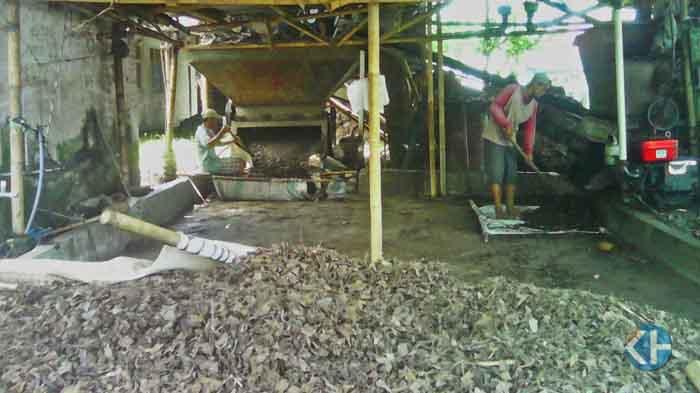 salah satu proses produksi kompos dari daun jati. Foto : Edo