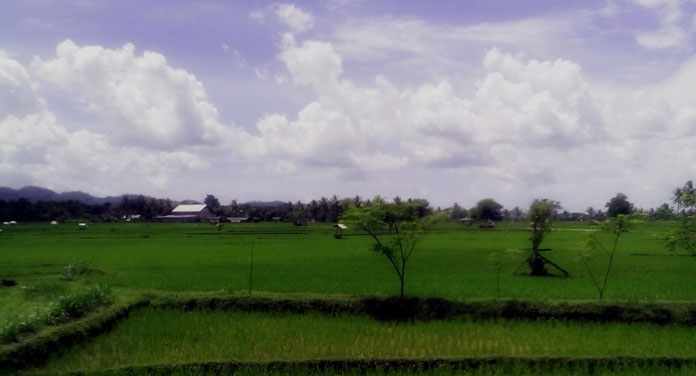 Hamparan sawah Desa Sidorejo Ponjong. Foto: Hari.