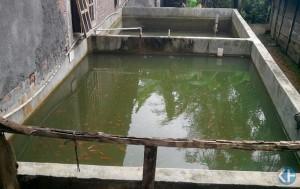 Kolam Ikan warga Gedad. Foto:Atmaja