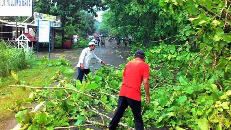 Hujan deras di Wonosari, banyak pohon tumbang. Foto: Juju.