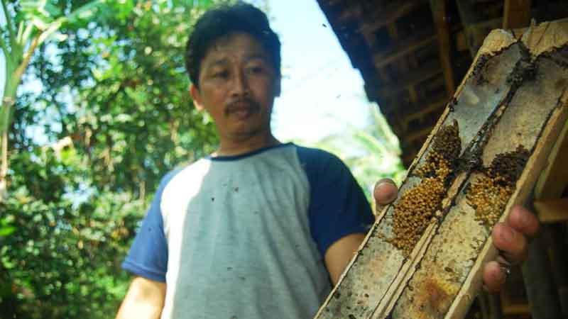 Berternak Lebah lanceng menggunakan bambu sebagai sarang lebah. Foto : juju