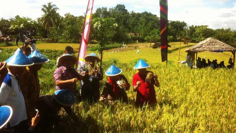 Tradisi Metik dan Boyongan Dewi Sri di Plumbungan Patuk. Foto: Juju.