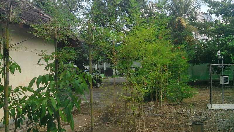 bambu-dishutbun