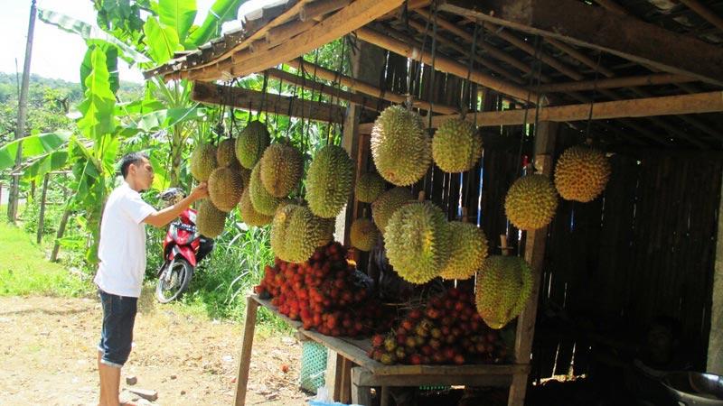 Warung buah di tepi jalan Raya Patuk. Foto: Atmaja.