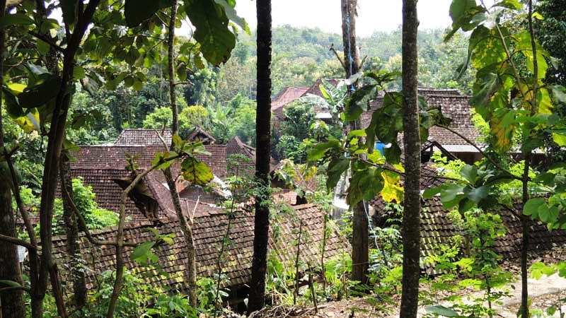 Permukiman Desa Kepek Saptosari di antara rerimbunan pepohonan. KH/Kandar.