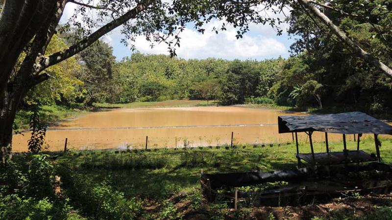 Berfungsinya kembali Telaga Motoendro sangat membantu pemenuhan kebutuhan air warga Temuireng. Foto: Kandar.
