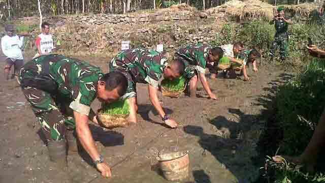 TNI menanam padi. Foto : Andri