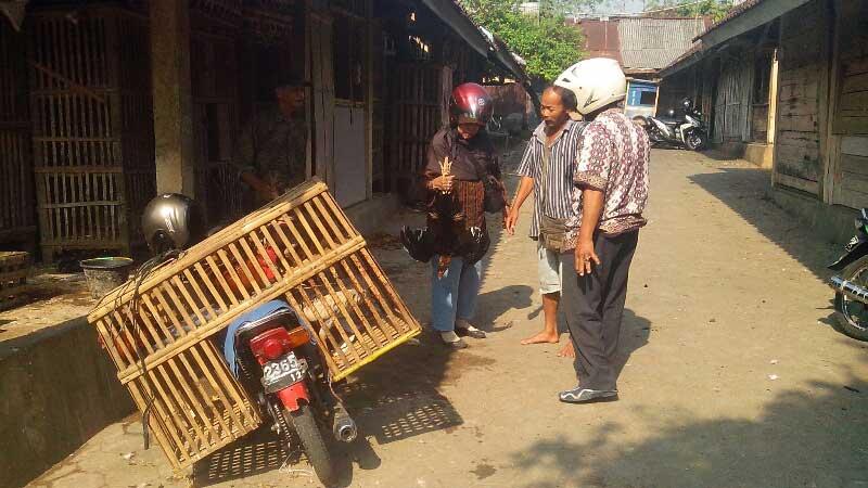 Pedagang ayam kampung di Pasar ayam. KH