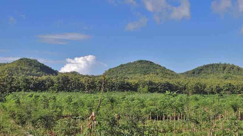 Hutan di Gunungkidul. Foto : KH/Kandar