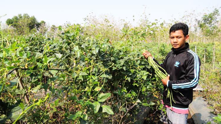 Muhammad Nurdin dan tanaman sayur yang diusahakannya. KH/Kandar.