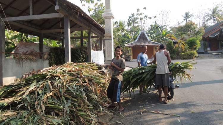 Pedagang pakan ternak. Foto : KH/Kandar