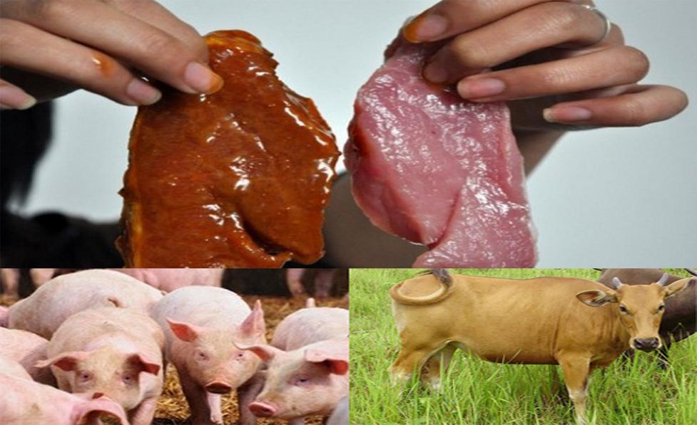 Perbedaan daging sapi dan babi. Sumber: Internet