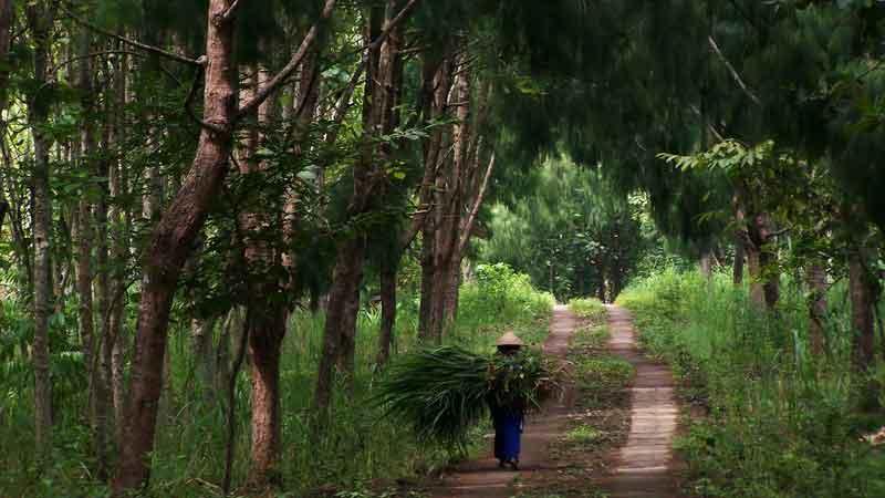 Jalan lingkungan di kawasan Hutan Wanagama Playen. KH/Edo.