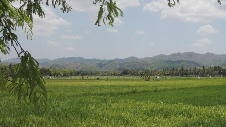 Lahan pertanian di Ponjong, Foto: KH/ Kandar