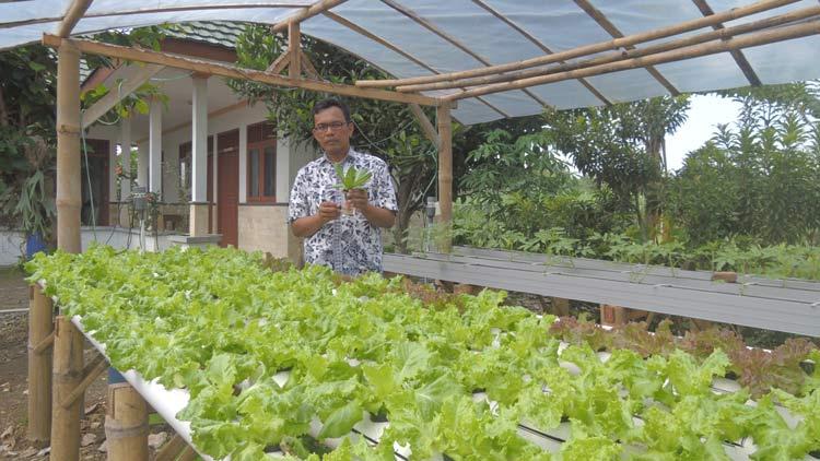 Budi Kuncoro SP dengan tanaman Hidroponiknya di BP3K Wonosari. KH/ Kandar