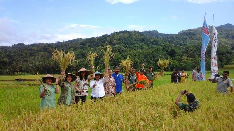 Pelaksanaan panen raya di Nglegi, Patuk. KH/ Edo