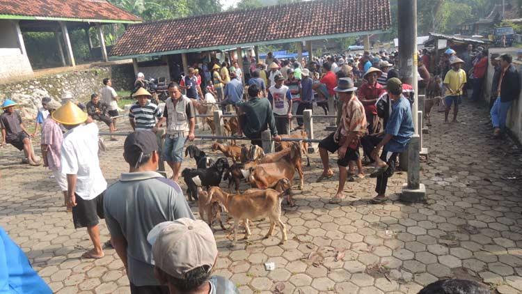 Suasana Pasar Kambing Trowono, Karangasem, Paliyan. KH/ Kandar