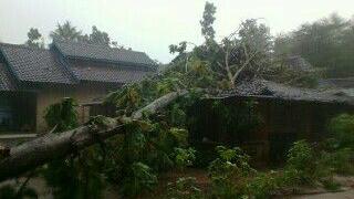 Pohon roboh timpa rumah Ngatijo di Playen. KH/ Edo