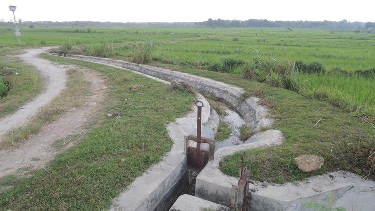 Areal persawahan di Pulutan, dengan Sumor Bor mampu panen dua hingga tiga kali dalam setahun. KH/ Kandar