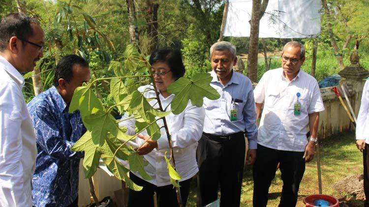 Menteri LHK Siti Nurbaya saat mengunjungi Persemaian Permanen Tahura Bunder, Gading, Playen. KH/ Edo
