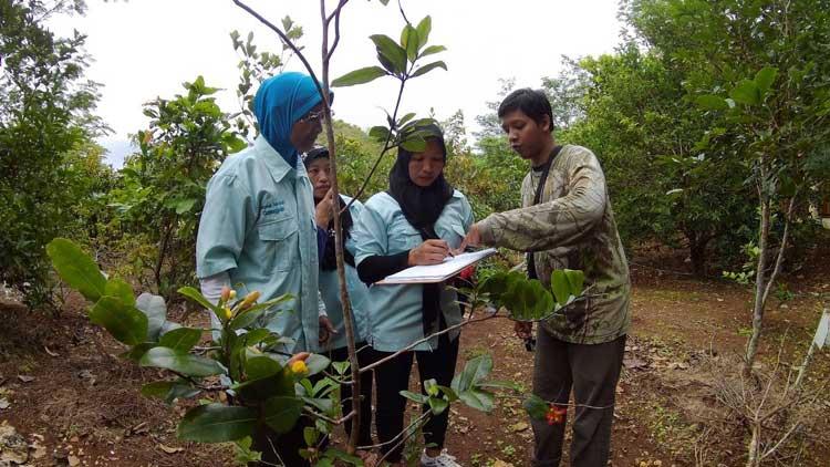 Pemetaan dan pendataan jumlah serta jenis tanaman oleh Kelompok Wanita Tani didampingi Yayasan Kanopi Indonesia. foto: dok. Yayasan Kanopi.