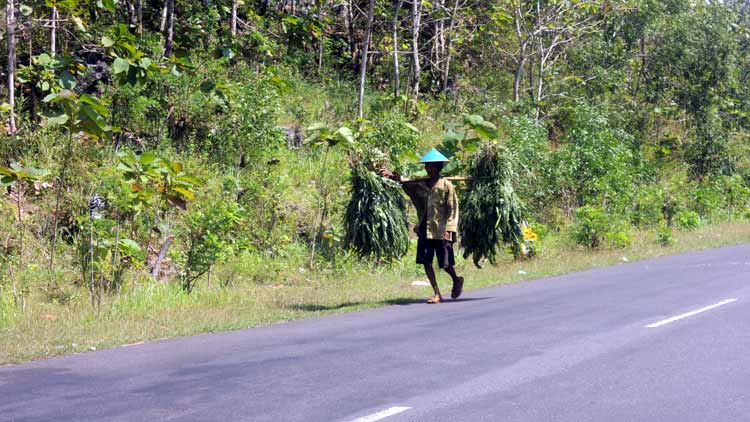Petani kecil di daerah pinggiran, tak merasa ada yang istimewa adanya gegap gempita peringatan HUT RI. KH
