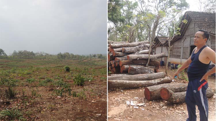 Hasil penebangan di RPH Mulo dan areal penanaman kembali dengan tanaman jenis ohon jati JUN. KH/ Kandar.