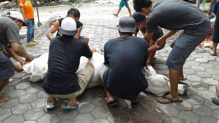 Penyembelihan hewan qurban di Desa Pulutan, KH/ Kandar