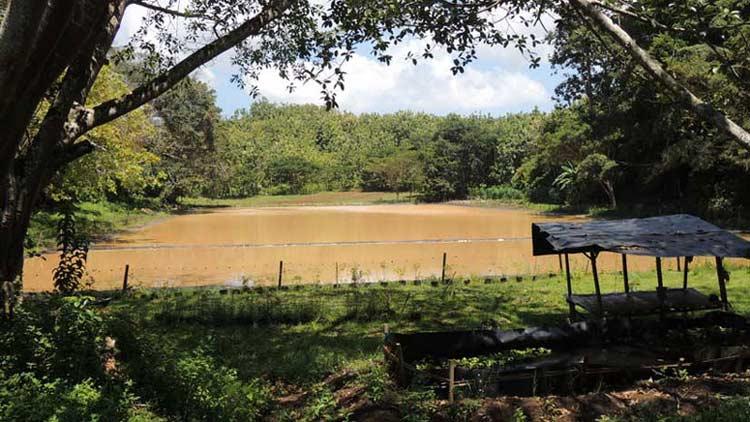 Telaga masih menjadi tumpuan pemenuhan air di wilayah Padukuhan Temuireng, Panggang.