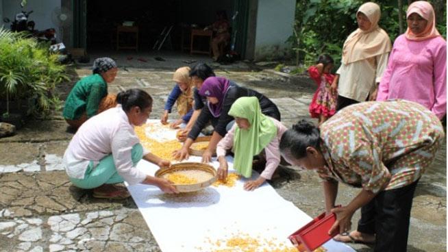 Warga kelompok Aksara Green sedang melakukan penjemuran, salah satu tahapan pembuatan minuman ekstrak tanaman rimpang. KH