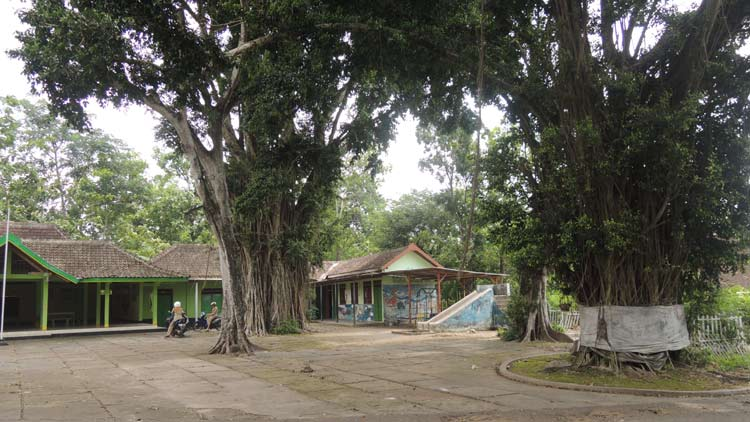 Dua Pohon beringin besar di bekas Pasar Kawak, Seneng Siraman. Pasar yang dahulu berada di wilayah kekuasaan Demang Puspawilaga. KH/ Kandar.