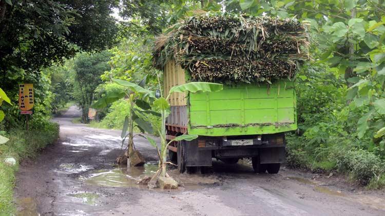 Sebuah truk pengangkut pakan melintas di jalan berlubang. KH/ Kandar