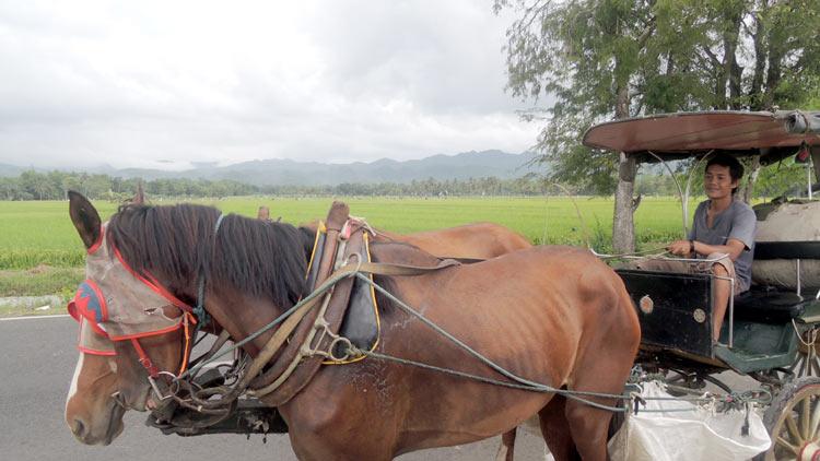 Giyarto bersama kuda dan andongnya, melayani sewa dan jalan-jalan keliling kampung. KH/ Kandar