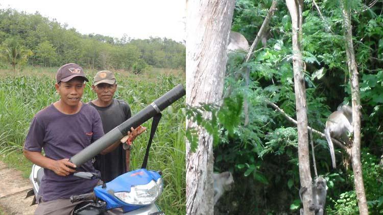 Kiri: Petani bersiap menghalau Monyet dengan metode pengusiran eksperimental menggunakan petasan, dan ketapel. Kanan: Monyet ekor panjang sebagai salah satu sumber keanekaragaman hayati juga membutuhkan tempat hidup. KH.