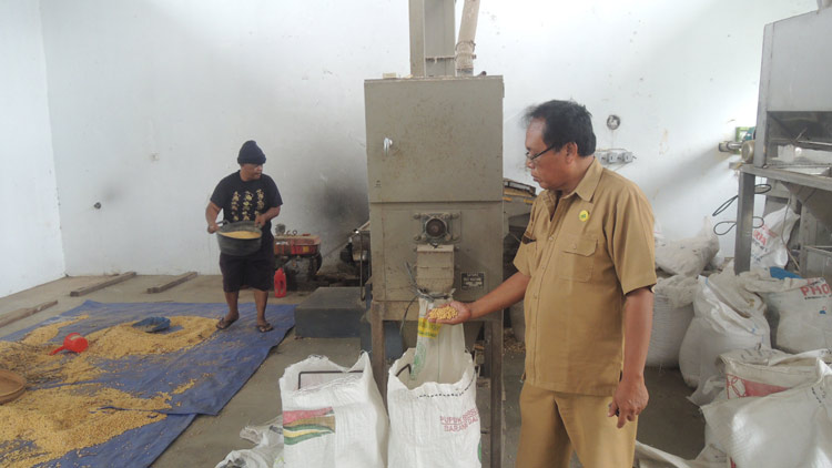 Koordinator BPPTPH Unit Produksi Benih Palawija Gading, Playen, Purwanto menunjukkan proses seleksi benih. KH/ Kandar