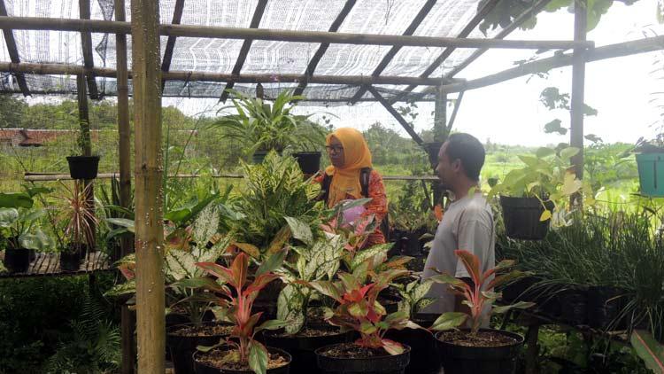 Budiyono sedang melayani pelanggan yang mencari bibit tanaman. KH/ kandar