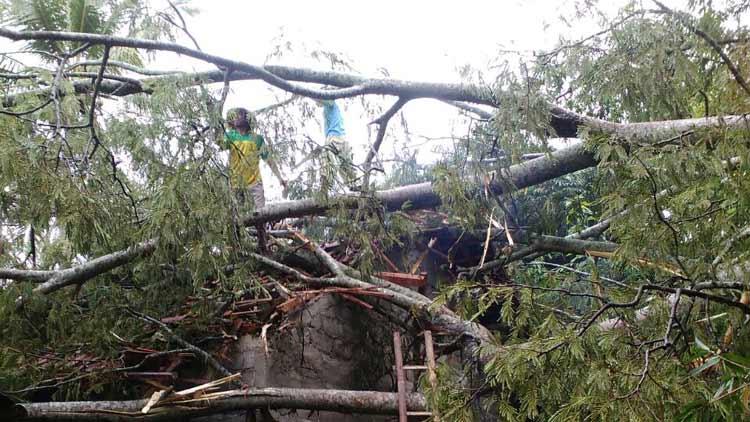 Pohon tumbang di Hargomulyo, Gedangsari timpa rumah warga.