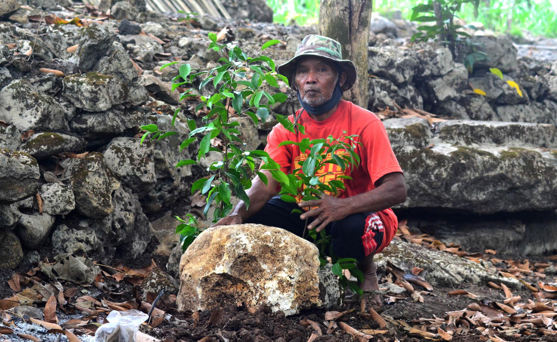 Mbah Juru Kunci melakukan penanaman ficus di Sumber Beji. Foto: Padmo